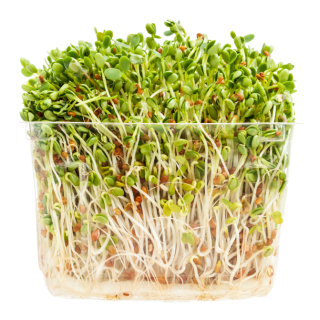 clover and radish sprouts
